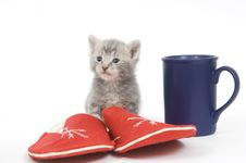Free Kitten, Slippers, Coffee Stock Photography - 2676302