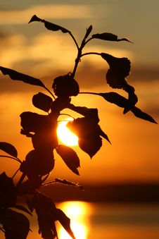 Free Branch On A Sunset. Stock Image - 2676431
