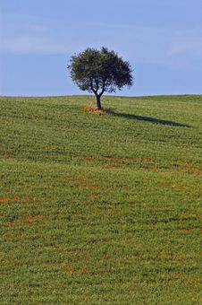 Free Landscape,Tuscany Royalty Free Stock Photos - 2678888