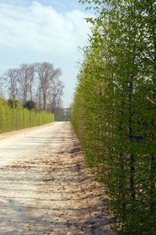 Free Hedges Stock Photography - 2679332