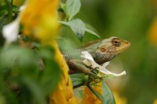 Free A Small Brown Lizard Stock Photo - 2679810