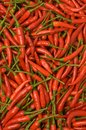 Free Chilli Pepper Stock Photo - 26708570