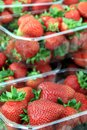 Free Strawberry Stock Images - 26708724