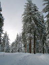 Free Winter Path Royalty Free Stock Images - 26709169