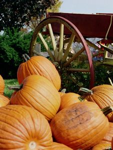Free Pumpkins Piled By Wagon Wheel Stock Photo - 26710160