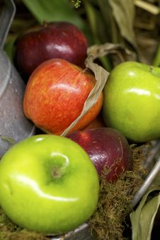 Free Apples Stock Photos - 26712273
