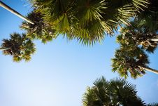 Free Crown Of Palm Trees. Royalty Free Stock Image - 26712976