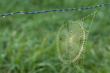 Free Spider Web Coated With Fog. Royalty Free Stock Image - 26713176