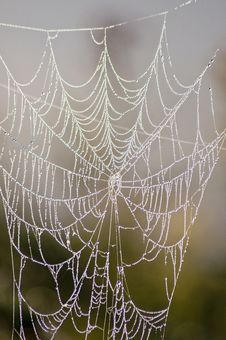 Free Spider Web Coated With Fog. Stock Image - 26713241