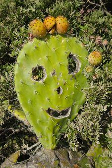 Free Merry Cactus Royalty Free Stock Photo - 26713675
