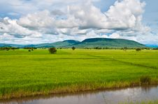 Free Rice Field And Montain Royalty Free Stock Photo - 26717735