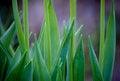 Free Green Plant Closeup Royalty Free Stock Photo - 26729965