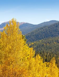 Free Colorado Aspen Tree And Mountain View Stock Photos - 26724883