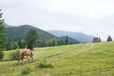 Free Beautiful Horse Goes To Pasture. Royalty Free Stock Photography - 26725557