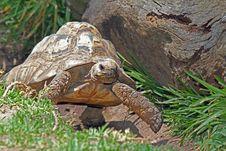 Free Tortoise Stock Image - 26727751
