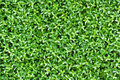 Free Artificial Tiny Green Leaves Texture Royalty Free Stock Photography - 26731047