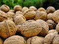 Free Walnuts Royalty Free Stock Photo - 26739545
