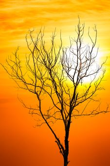 Free Death Tree Over Sky Background In Sunset Stock Image - 26732091