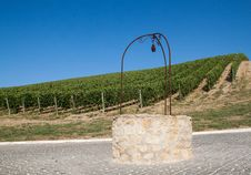 Free A Vineyard In Italy Royalty Free Stock Image - 26734756