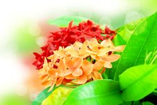 Free Flora And Fresh In The Morning Royalty Free Stock Photos - 26735268