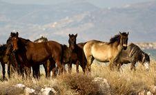 Free Wild Horses II Stock Image - 26738551