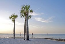 Free Palm Trees On The Beach At Dusk Royalty Free Stock Photography - 26741297