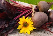 Free Homegrown Beetroots Royalty Free Stock Images - 26741389