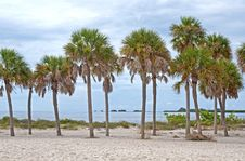 Free Palm Trees At The Beach, Overcasted Stock Images - 26741404