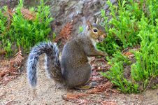 Free Laughing Squirrel Stock Photo - 26746910