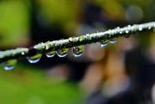 Free Raindrops On Bamboo Grass Stock Images - 26748434