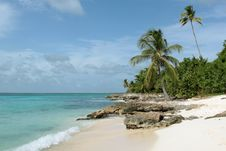 Free Saona Beach Royalty Free Stock Photo - 26748625