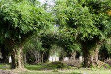 Free Bamboo Grove Stock Photography - 26753682