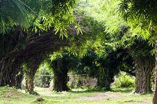 Free Bamboo Grove Royalty Free Stock Photos - 26753698