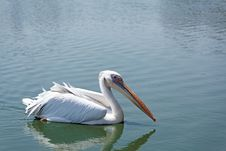 Free White Pelican Royalty Free Stock Images - 26753889
