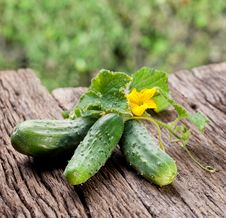 Free Cucumbers With Leaves Stock Photos - 26758513