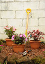 Free Colorful Garden Royalty Free Stock Photo - 26760765