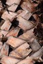 Free Natural Palm Tree Stem Cut Braches Stock Photos - 26763063