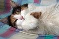 Free Sleeping Fluffy Cat Stock Image - 26765311