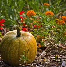 Free Cute Little Pumpkin Stock Photography - 26762502