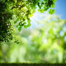 Free Sunny Day On The Meadow Stock Photos - 26763663