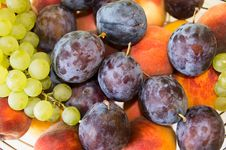 Free Mix Of Autumn Fruits, Close-up Royalty Free Stock Image - 26765146