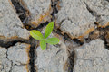 Free Plant In Cracked Earth. Stock Images - 26771694