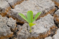 Free Plant In Cracked Earth. Stock Image - 26771701