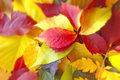 Free Colorful Leaves Royalty Free Stock Photo - 26776175
