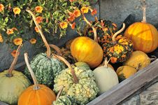 Free Pumpkins And Orange Flower Royalty Free Stock Image - 26772146