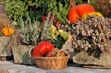 Free Pumpkins In A Basket And Heather Royalty Free Stock Image - 26772156
