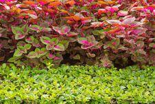 Free Plants In Garden. Stock Photo - 26772170