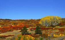 Free Autumn Scene In Colorado Stock Photos - 26773773