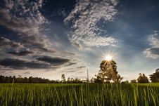 Free Sunset On The Tree Stock Photography - 26775912