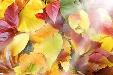 Free Colorful Autumn Leaves And Sun Beams Stock Photo - 26776090